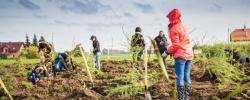 Grupa Raben posadziła już ponad 10 000 drzew