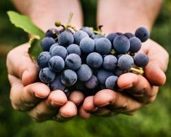Kto śledzi wina w Polsce?