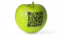 Organizacja transportu w sektorze przetwórstwa owoców i warzyw