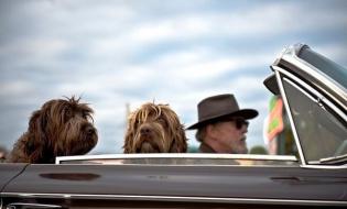 Operator promowy DFDS odnotowuje wzrost liczby podróżnych ze zwierzętami domowymi