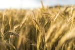 C.Hartwig Gdynia przewiezie zboże użytkowników giełdy rolnej Commoditrader