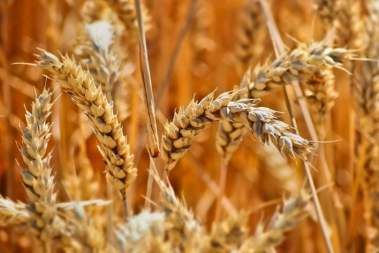 1 marca rusza Platforma Żywnościowa