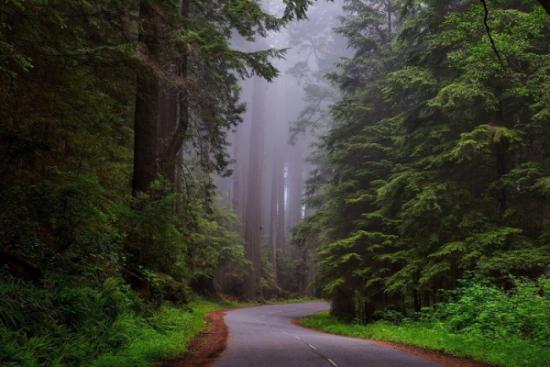 Wody opadowe z dróg krajowych na ratunek lasom